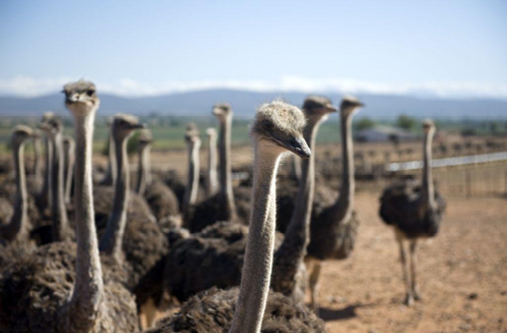 Foto: Senai Aksoy/Shutterstock