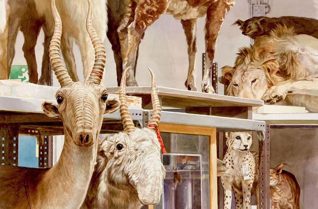 Peter Holls Bilder zeigen die ausgestopften Tiere so, wie sie vor Ort stehen. Foto: Peter Holl