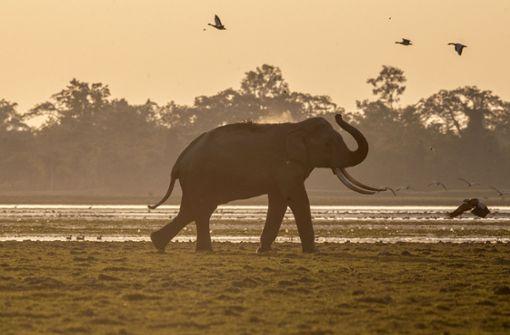 18 Elefanten bei Gewitter in Indien gestorben