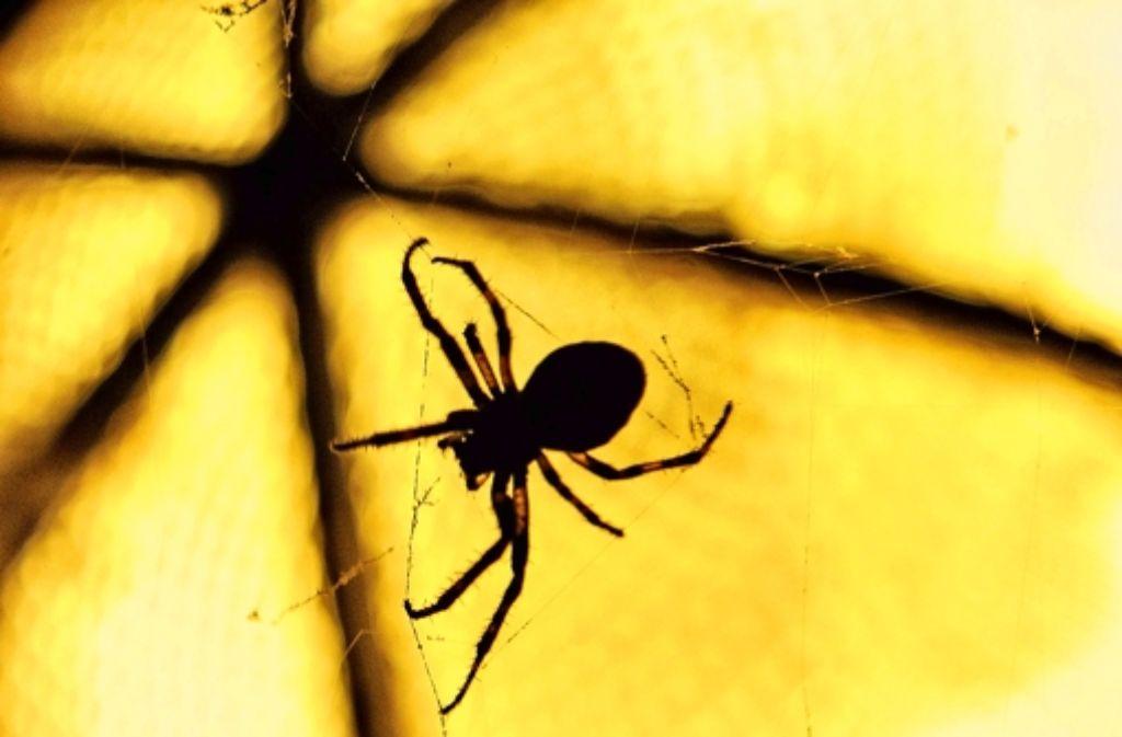 Weil sich direkt vor ihrem Gesicht eine Spinne abseilt, baut eine 19-jährige Autofahrerin am Donnerstagmorgen in Rechberghausen einen Unfall. Foto: dpa/Symbolbild