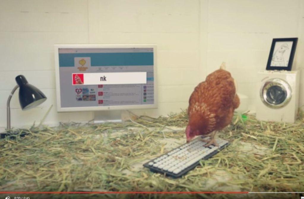 Huhn Betty twittert, indem sie auf einer Tastatur herumpickt. Screenshot: Youtube / ChickenTreatAU