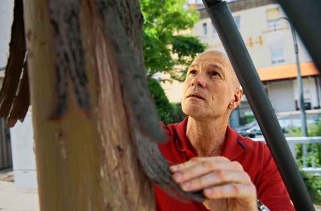 Till Teckentrup kontrolliert einen Baum, der schwer beschädigt ist. Foto: Martin Stollberg