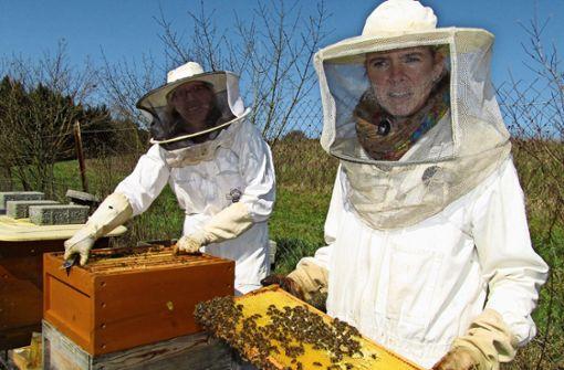 Den Bienen geht die Puste aus