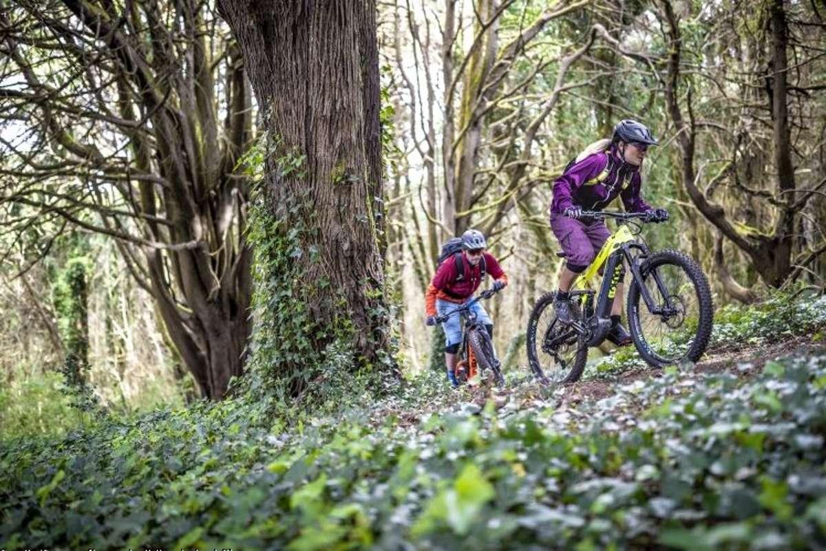 Der Tag des Waldes erinnert seit vier Jahrzehnten daran, dass wir mit der grünen Lunge - gerade auch als Radfahrende - achtsam umgehen sollen. Und das an 365 Tagen im Jahr. Foto: www.haibike.de | pd-f