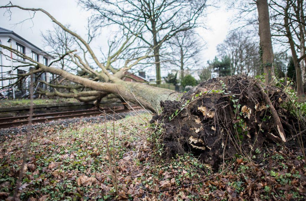 """Sturmtief """"Friederike"""" hat in Deutschland zahlreiche Bäume entwurzelt. Foto: dpa"""