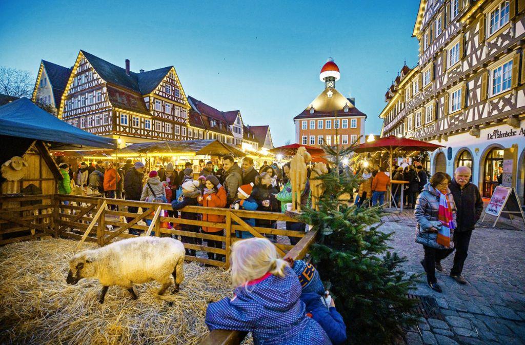 Die Schafe auf dem Schorndorfer Weihnachtsmarkt begeistern vor allem die Kinder. Foto: