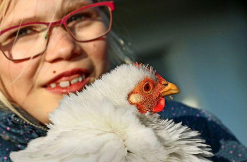 Das Huhn im eigenen Garten