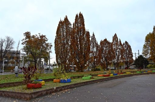 Baumfällungen am Benz-Platz