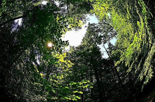 Im Wald ist alles im grünen Bereich