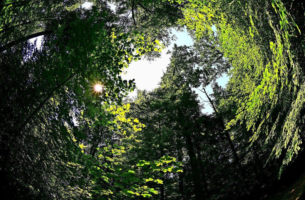 Auch im Wald dreht sich alles um den Einklang von Ökologie und Ökonomie. Foto: Rudel/Archiv