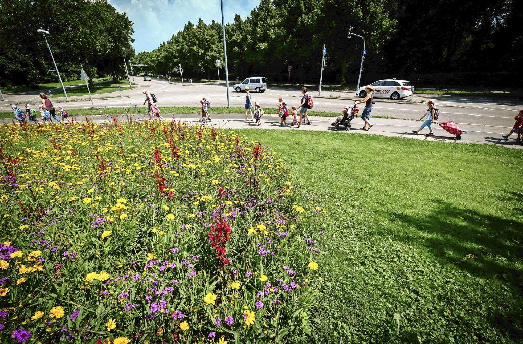 Die Blumenwiese am Killesberg-Haupteingang (Foto links) ist aus Kostengründen ebenso verkleinert worden wie die Beete mit Wechselflor im Park (Foto rechts unten). In Zuffenhausen hat das Gartenbauamt bunte Blumen gepflanzt – ausnahmsweise.. Foto: Lichtgut/Achim Zweygarth