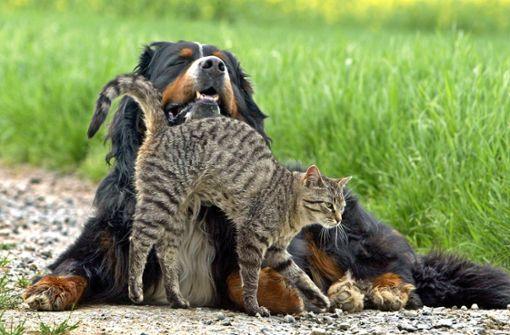 Natürlich vorbeugen gegen Zecken bei Hund und Katze