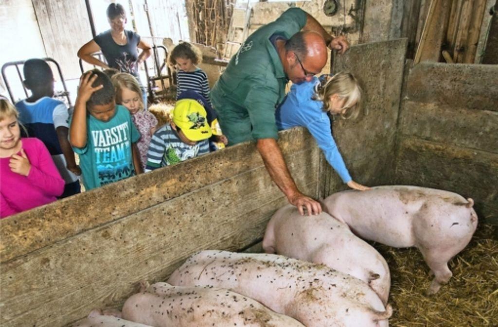 """Die Kinder lernen auf dem Hof von Thomas Rott, dass sich Schweine """"voll rau"""" anfühlen und Kühe im Oberkiefer nur eine Knorpelleiste haben. Foto: factum/Weise"""