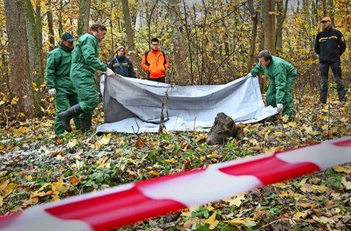 Baden-Württemberg rüstet sich gegen die Afrikanische Schweinepest
