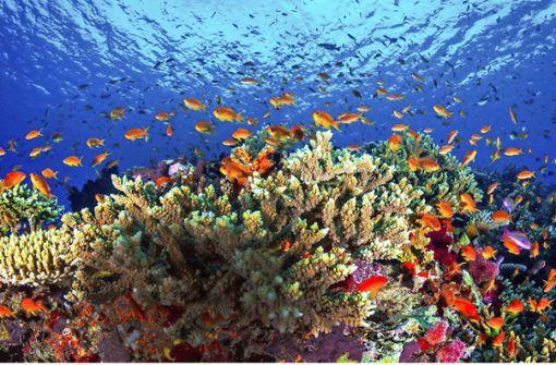 Das Great Barrier Reef steht vor dem Kollaps