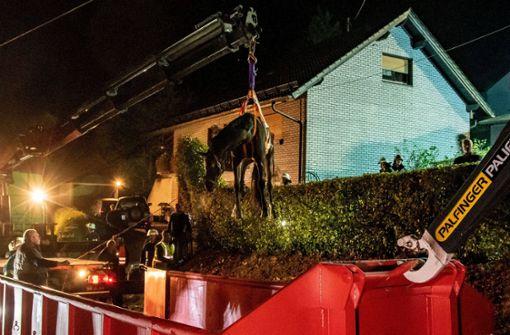 Erschöpftes Pferd mit Kran aus Garten gerettet