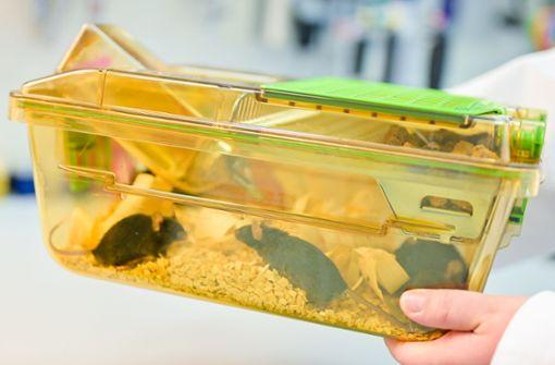 Tierversuche für die Medizin – Land fördert Alternativen