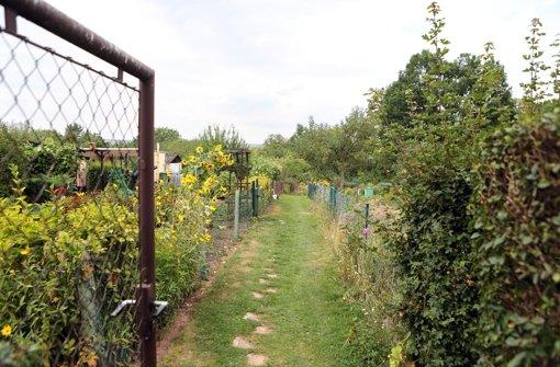Geheimnisse im Kleingarten