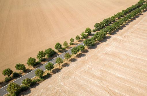 Raubbau an Wäldern und Feldern