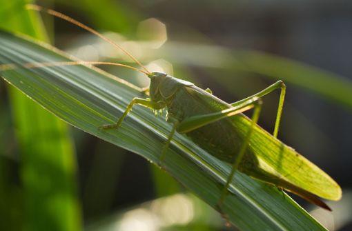 Geht es Insekten  in den USA besser als bei uns?