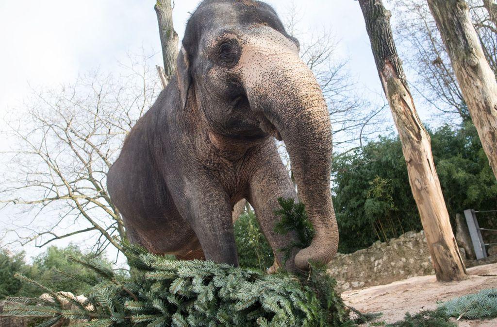 Die Elefantendame Pama und ihre Mitbewohnerin Zella müssen noch ein paar Jahre warten, dann soll die neue Elefantenwelt fertig sein. Foto: dpa