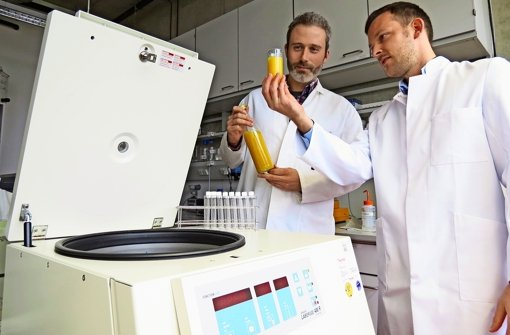 Forschung im Obstkorb