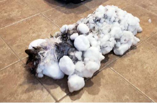 Eingefrorene Katze Fluffy mit Föhn wiederbelebt