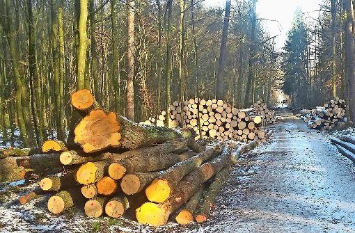 Forstamt macht 500 Festmeter Holz