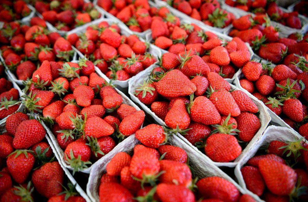Wenn es Erdbeeren gibt, ist der Sommer nicht weit. Lesen Sie wissenwerte Fakten über die roten Früchte in der Bildergalerie. Foto: dpa