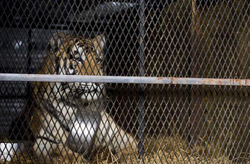 Platz zum Kiffen gesucht, Tiger gefunden