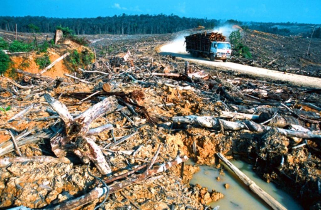 Landwirtschaft statt Wald: der ökologische Verlust müsste eigentlich auf die Kosten für Agrarprodukte aufgeschlagen werden. Foto: WWF