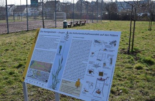 Infos über die Honigwiese versüßen den Weg