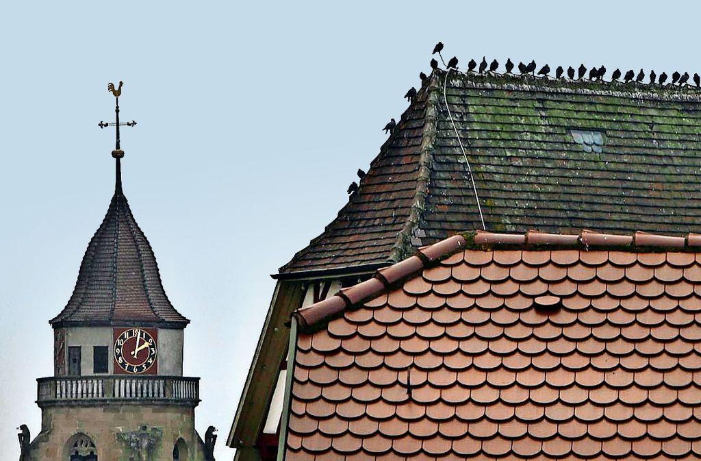 """Das Dach des """"Schwarzen Adlers"""" ist ein beliebter Treffpunkt für die Tauben in der Altstadt. Foto: factum/Archiv"""