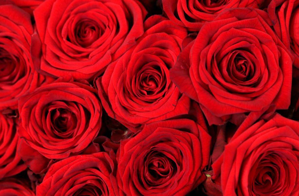 Rote Rosen symbolisieren Liebe. Foto: dpa/Roland Weihrauch
