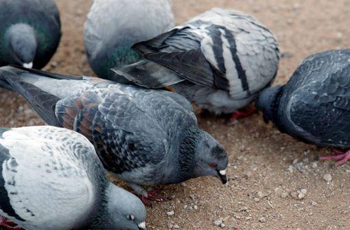Plakataktion gegen Taubenfütterer