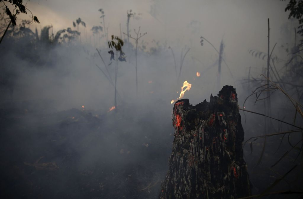 Für die Waldbrände am Amazonas spendet die Stiftung von LeonardoDiCaprio fünf Millionen Dollar. Foto: dpa
