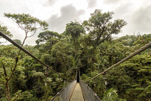 Nur eine von vielen Hängebrücken auf dieser spektakulären Fahrradtour durch den wilden Regenwald Neuseelands.