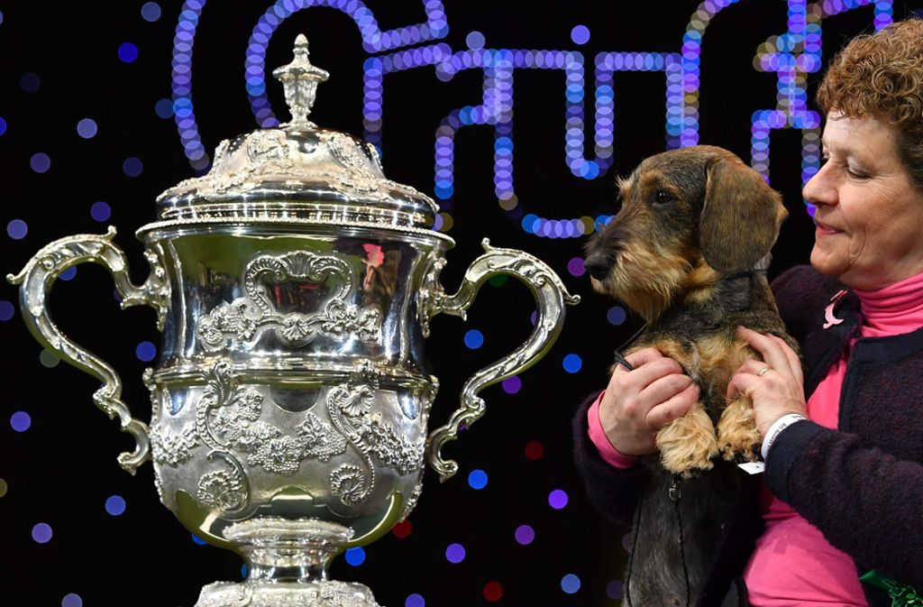 Dackel Silvae Trademark Frauchen Kim McCalmont freuen sich über den Pokal. Foto: AFP/BEN STANSALL