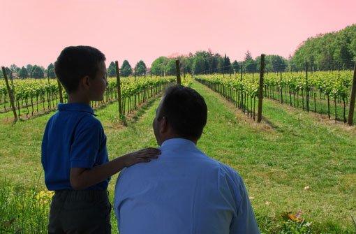 Sauvignon Blanc – eine Rebsorte im Aufwind
