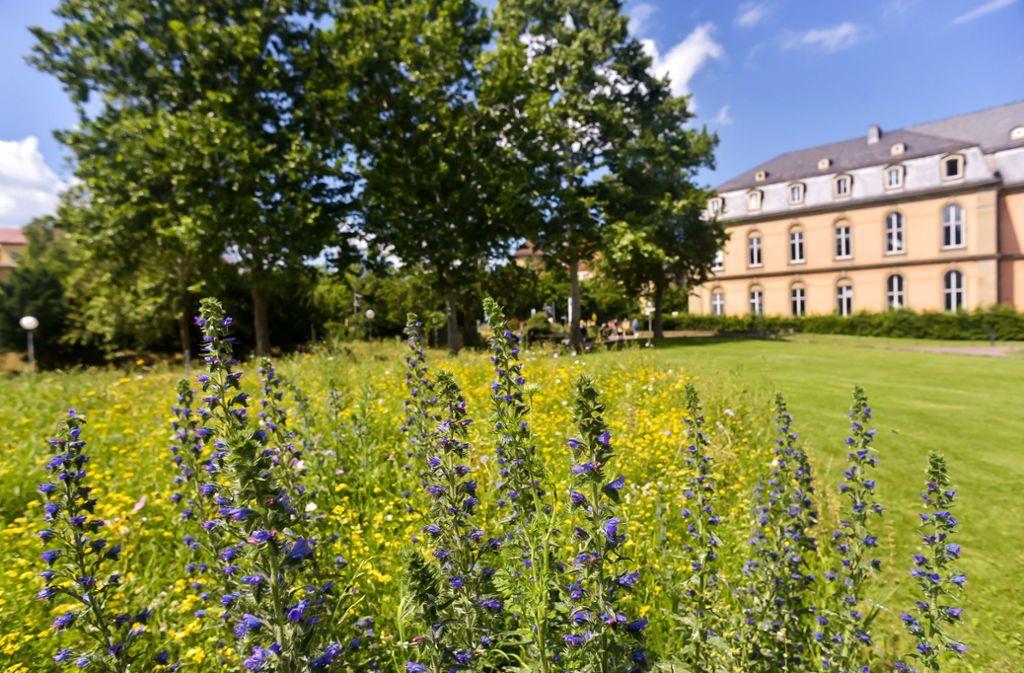 Der Akademiegarten ist so etwas wie der Vorhof des Neuen Schlosses. Foto: Max Kovalenko
