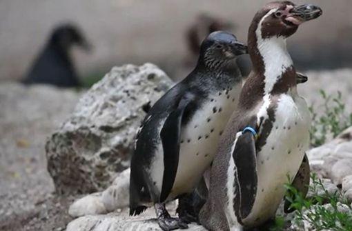 Münchner Tierpark bietet Zoo-Führung über schwule Tiere