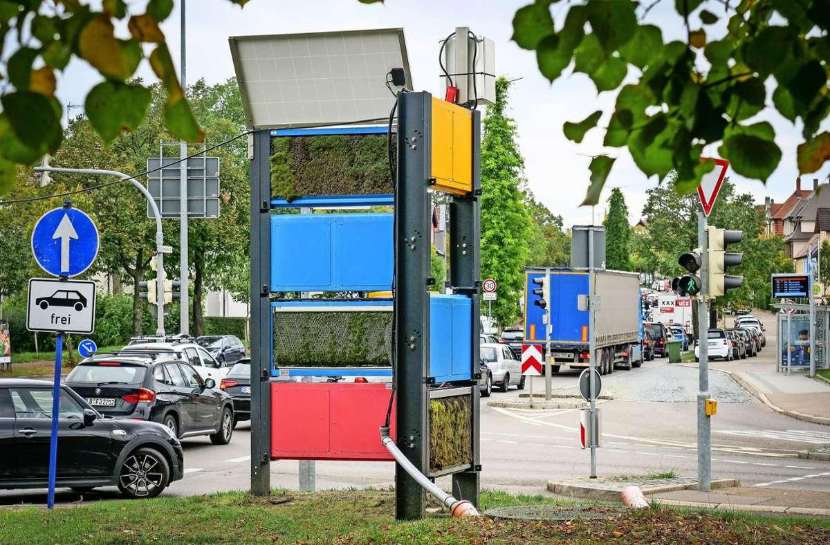 Kleine Flächen, große Hoffnungen:  Mooswand in Eglosheim Foto: factum/Simon Granville