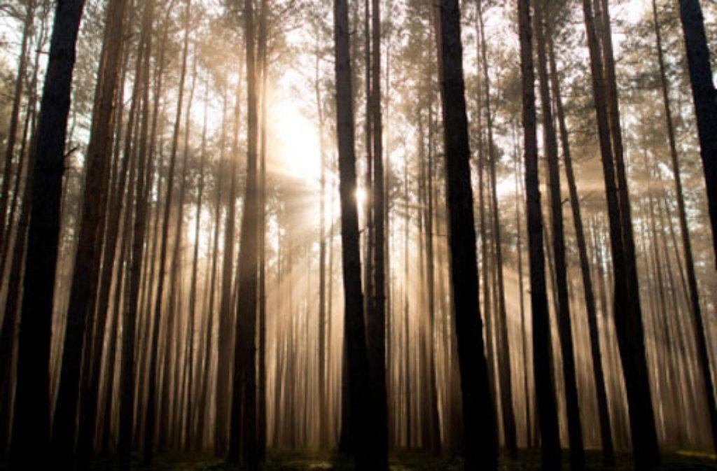 Im Stadtwald in Frickenhausen wird ein 26-Jähriger am Mittwoch unter einer Eiche begraben. Foto: dpa/Symbolbild