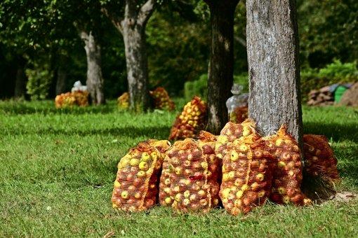 Rekord-Absatzzahlen für den Kreis-Apfelsaft