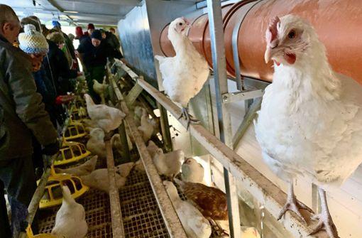 Warum der Hühnerstall wandert