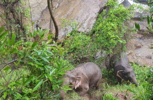 Elefanten wollen Junges retten und stürzen in den Tod
