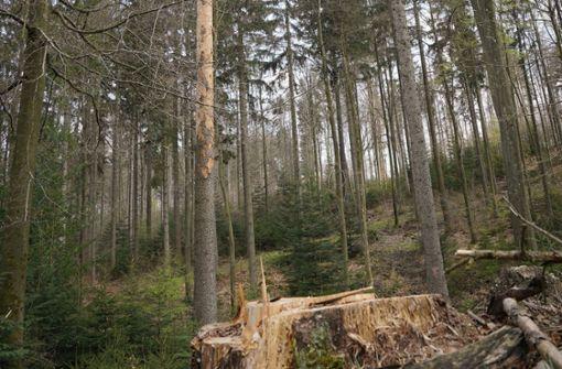 Der Wald hat ein echtes Problem
