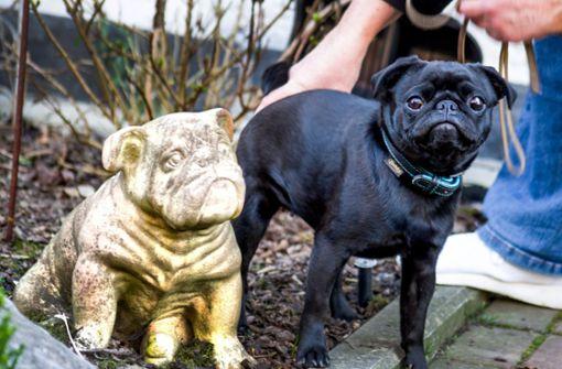 Viel Entrüstung nach Verkauf des Hundes auf Ebay