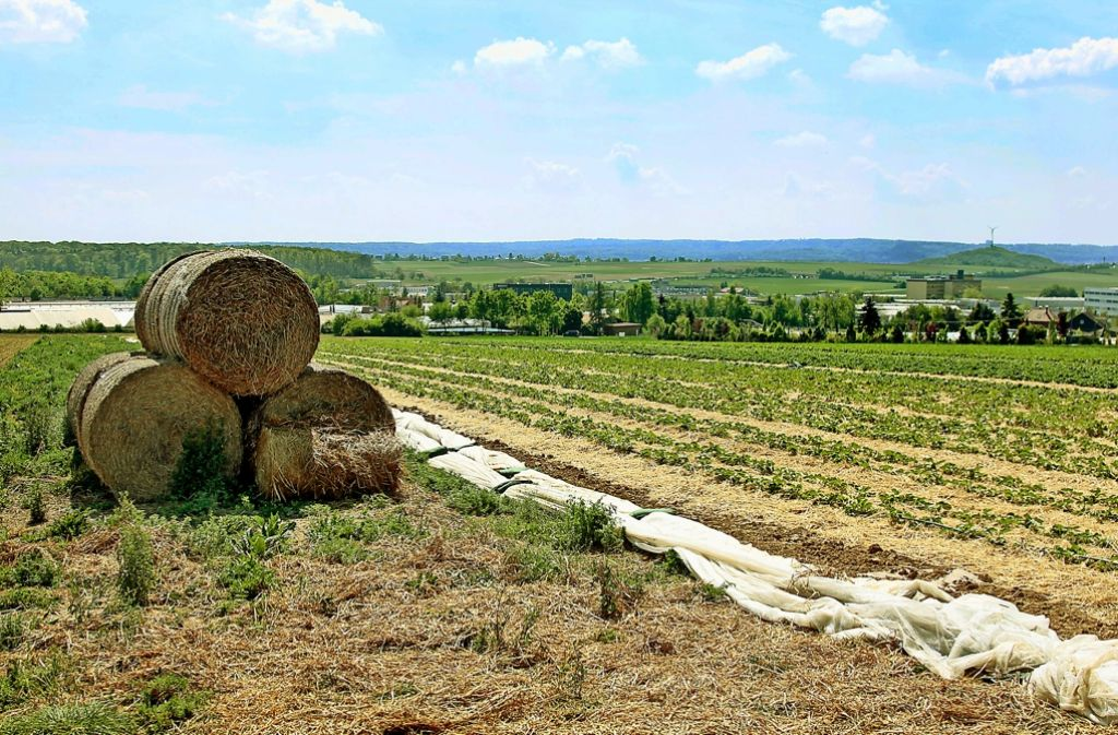 """Die Ackerflächen in Korntal-Müllerheim könnten bald einem Gewerbegebiet weichen. Die Stadt sieht ein """"klassisches Gewerbegebiet"""" jedoch kritisch. Foto: factum/Weise"""