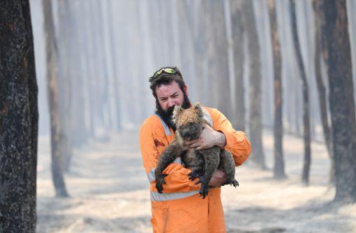 So helfen die Südwest-Zoos den Tieren in Australien